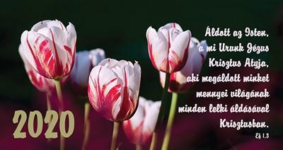 Zsebnaptár 2020 tulipán (Papír)