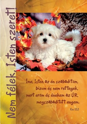 Képeslap-csomag Fehér kutyus falevelekkel