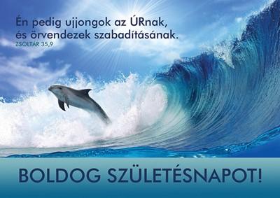 Születésnapos képeslap-csomag Delfin
