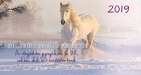 Zsebnaptár 2019 Fehér ló