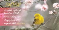 Zsebnaptár 2021 madár