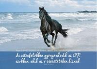 Képeslap-csomag Vágtató ló a tengerparton