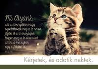 Képeslap-csomag Imádkozó cica