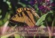 Képeslap-csomag Sárga pillangó