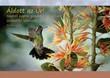 Képeslap-csomag Kolibri